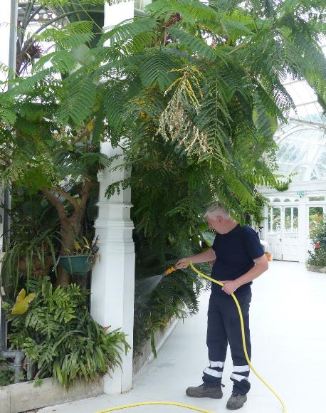 Colin the gardener